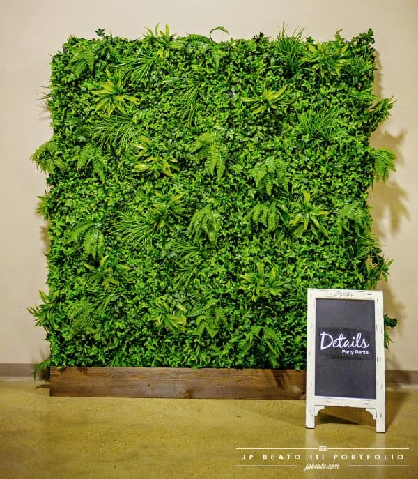 Tropical boxwood wall hedge